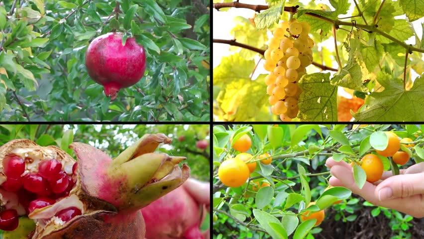 fruit harvest, collage