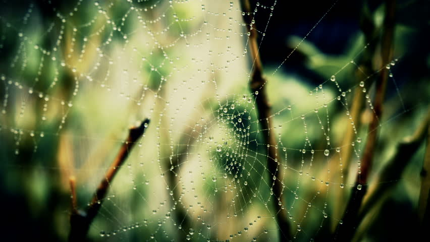 A Spiders Web.