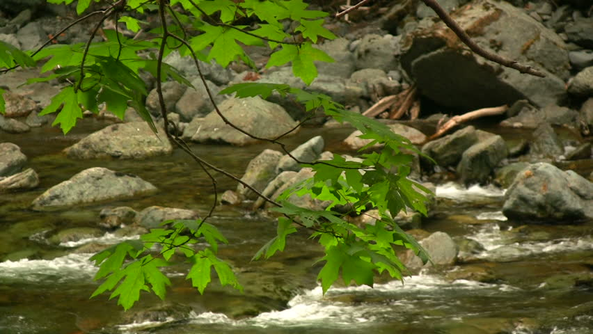 Maple leaves in front of a flowing river. Shot in HD 1080i. - HD stock video clip