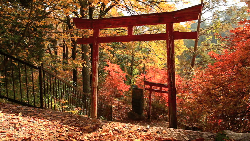 Falling autumn leaves with torii in the background.