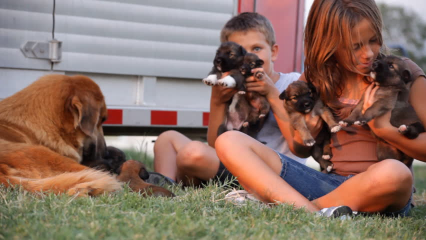 Two happy, laughing children playing with puppies bathed in the glow of the setting sun. - HD stock footage clip