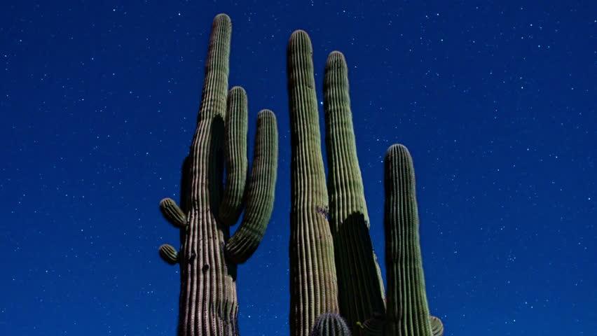 Time Lapse of Desert Cactus at Night 4K - 4096x2304, UHD, Ultra HD resolution