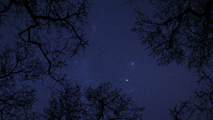 A 4k uhd time lapse of a starry night between some trees - Starry sky 4k ...