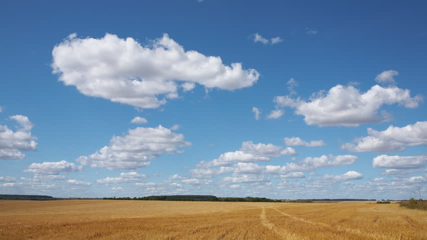 Time-lapse: white clouds flying on blue sky over yellow field #525487