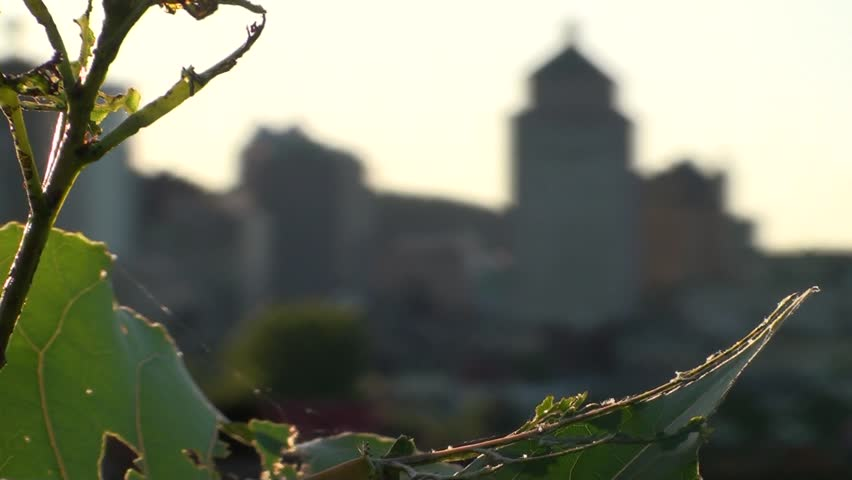 1080i HD Focus Change from Leaf to City - HD stock footage clip