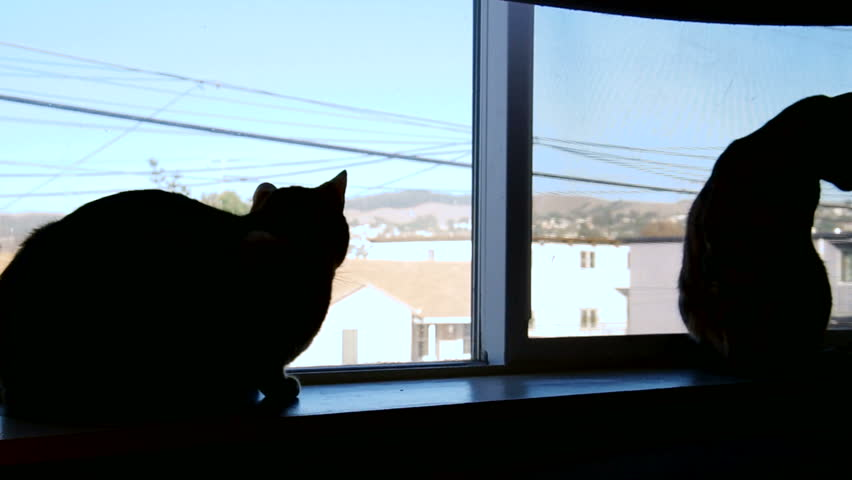 Two cats lounge in the window, silhouetted against an urban landscape and clear blue sky