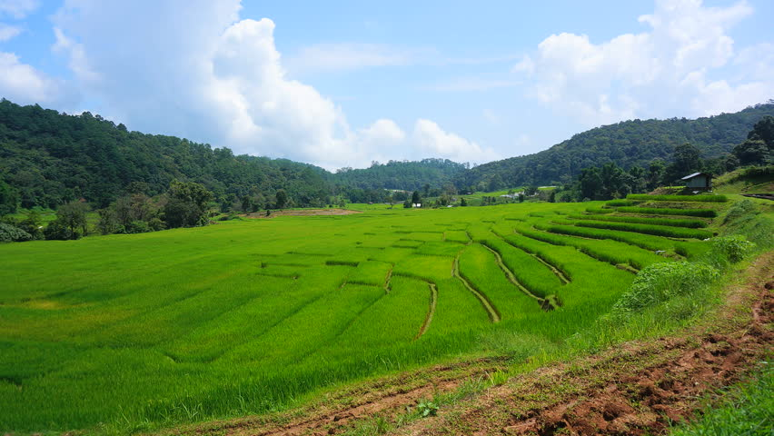 Rice paddy fields hd1080i timelapse water filled rice for Terrace farming meaning