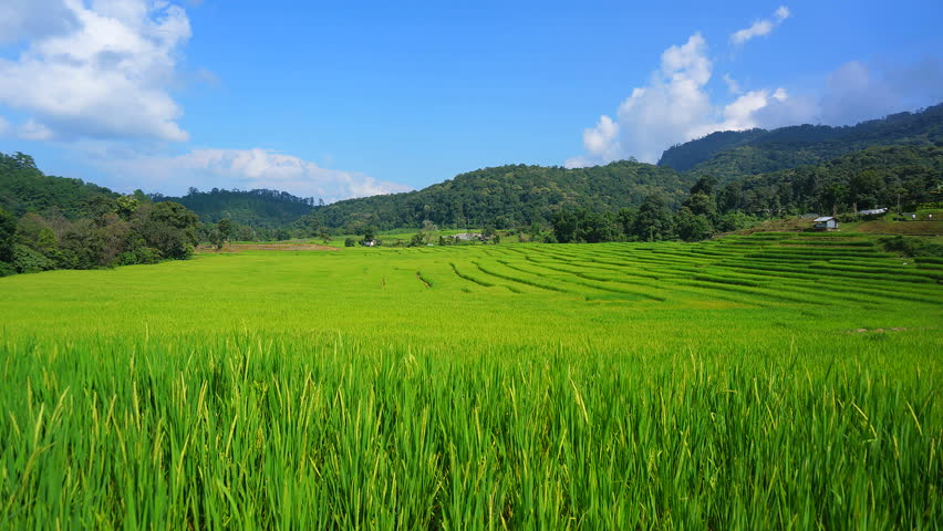 Rice paddy on terrace fields high definition video for Terrace farming definition