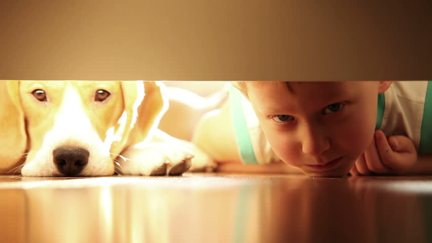 Laughing little boy with his best friend beagle dog under the bed