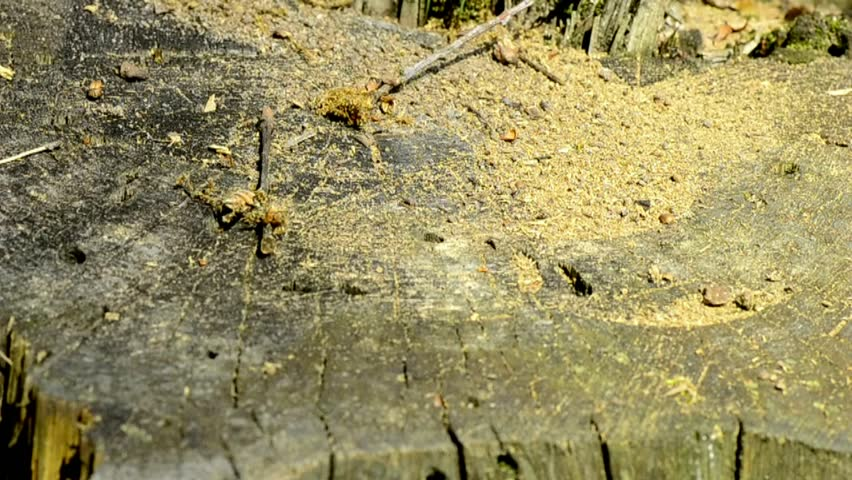 Anthill – Ant   ,   Ants at work   2