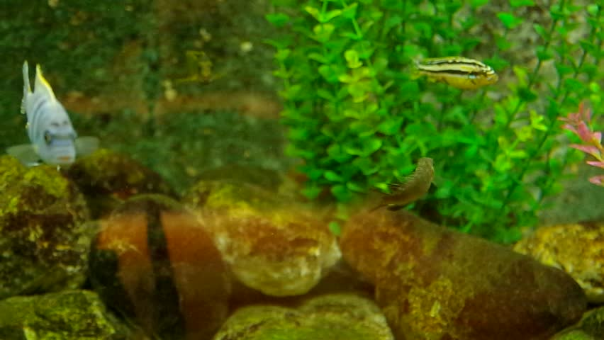 Different breeds of ornamental fish and algae live in an for Ornamental fish tank