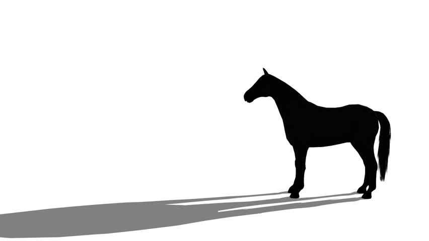 black horse silhouette foal pet running,farm animal wild life.beautiful spirit. cg_01752