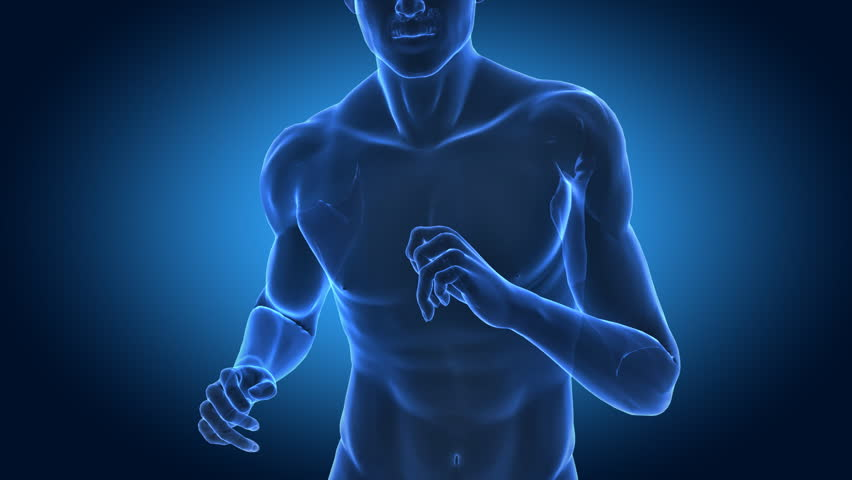 Runing man in x-ray with cardio data projection - fitness concept in loop --- Similar videos in my portfolio --- - HD stock footage clip