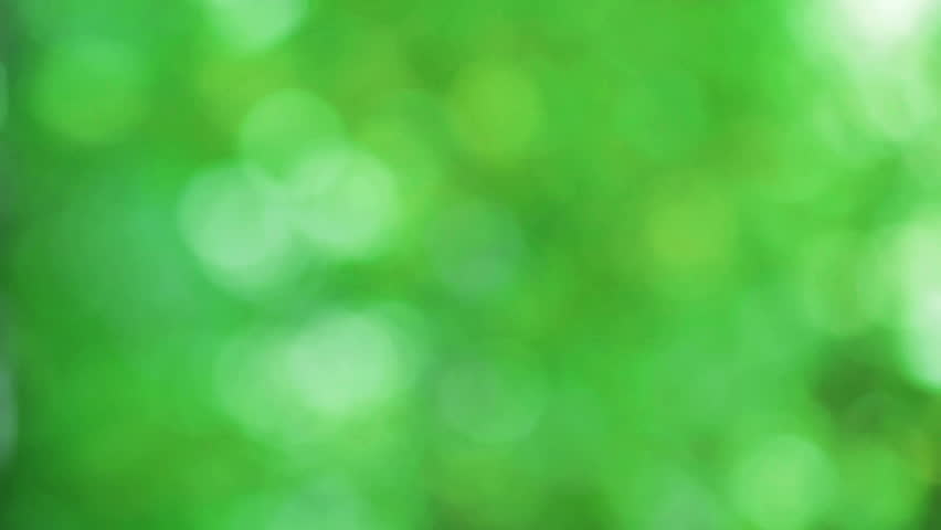 Defocused abstract nature background with green leaves and bokeh lights. HD