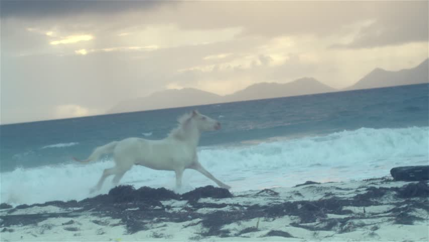 Horse running on beach 4