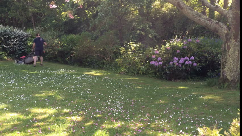 Time lapse footage - Mowing a green garden lawn covered in daisies with a rotary petrol powered mower.