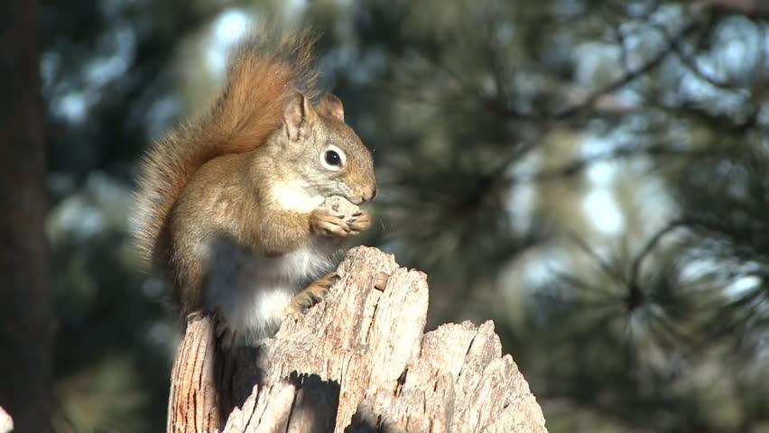 Header of Acorn Nut