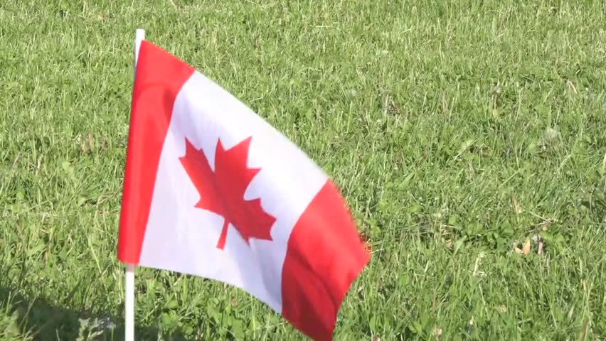 Canadian flag waving in a soccer turf or lawn. G