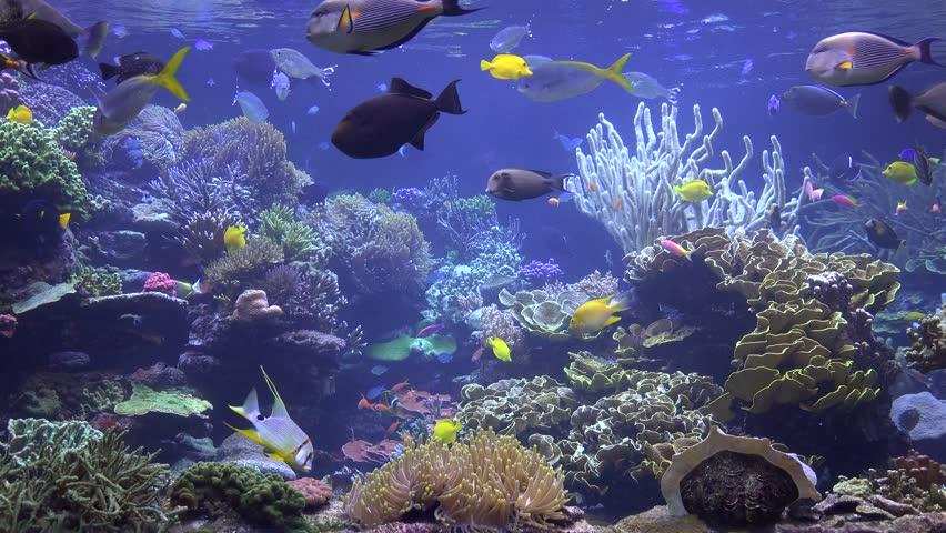 Fish aquarium 4k fish aquarium ultra hd 4k wallpapers for Fish tank video