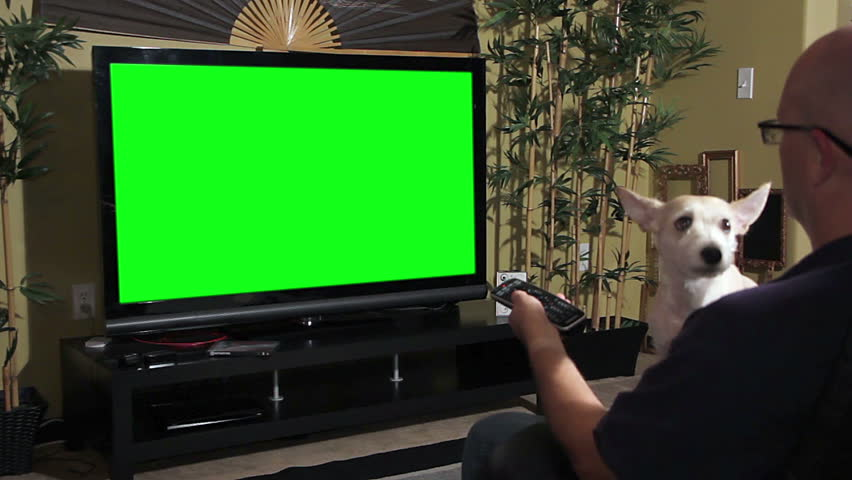 Over the shoulder shot of a man sitting with his dog, watching television with a green screen. | Shutterstock HD Video #6712933