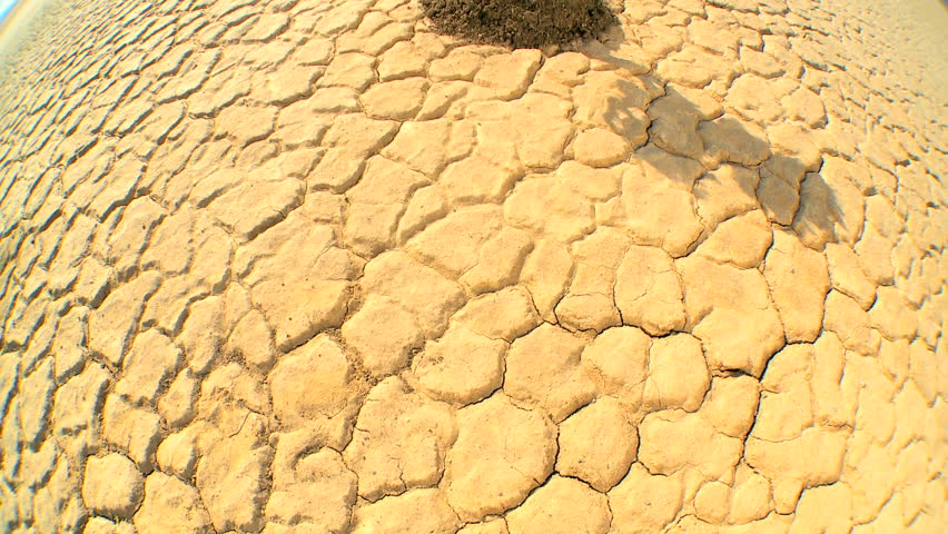 Overhead concept climate change shot of green tree growing in barren desert landscape in wide angle - HD stock video clip