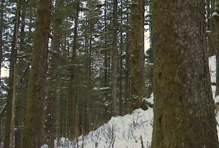 A bow hunter stalks his prey in the snow. - SD stock video clip