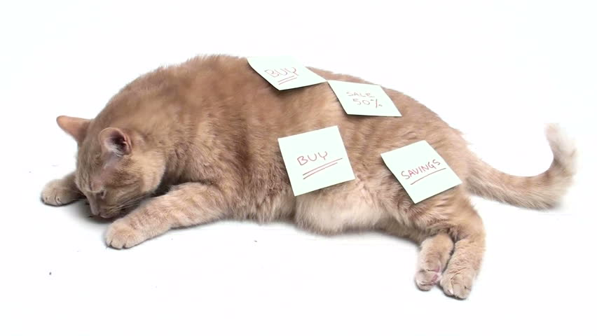 Cat covered in post it notes - HD stock footage clip