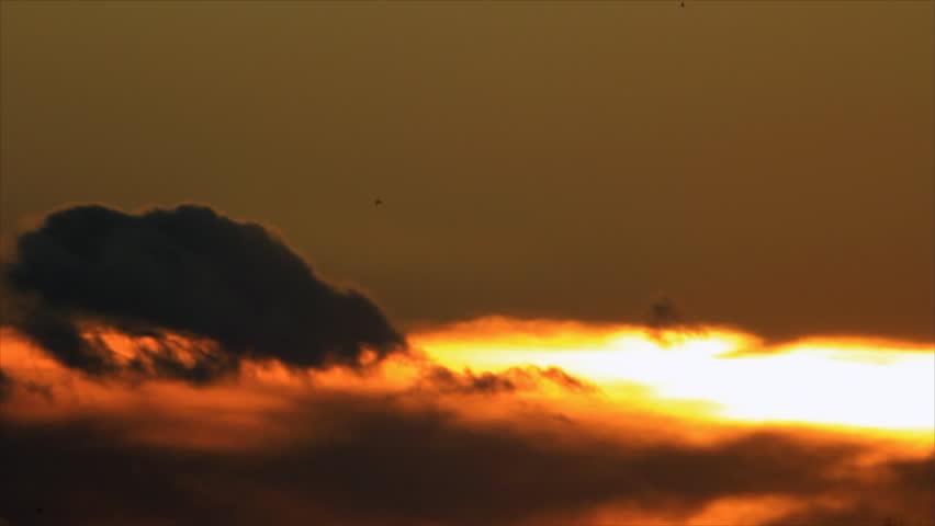 Birds on background sky luminosity - HD stock footage clip