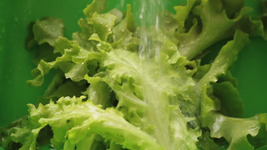 Washing lettuce. Lettuce use for salads. Healthy Food | Shutterstock HD Video #6960748