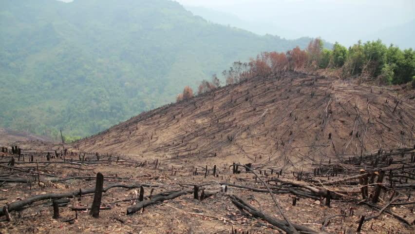 Deforestation After Forest Fire Natural Disaster Laos