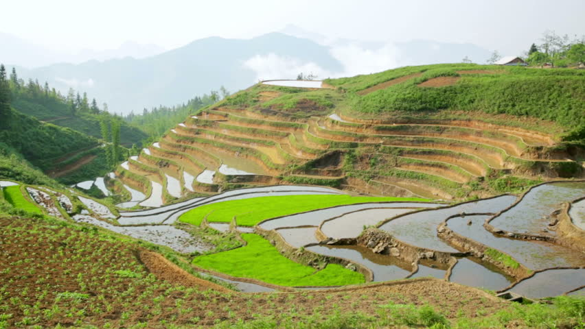 Gorgeous farm fields, rice paddy terraces, Sapa, Vietnam | Shutterstock HD Video #6972700