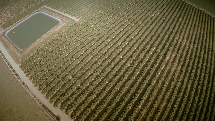 Aerial top view of an orange trees field. Great wide angle shot at  high altitude in a very clear summer day. Seville, Spain. HD