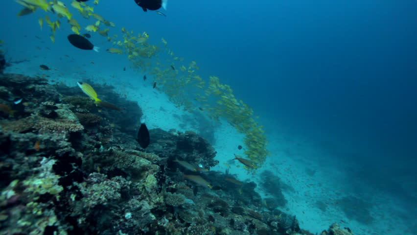 three divers over coral reef  - HD stock video clip
