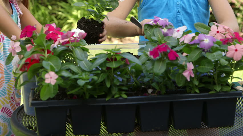 Scene tilts up to two little girls in a garden or backyard setting busy planting colorful flowers in a flower box. - HD stock video clip