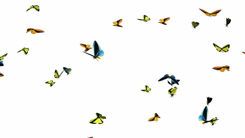 Looping Butterflies Fast Swarm Animation 1. With Alpha Mask, isolated on white - HD stock video clip