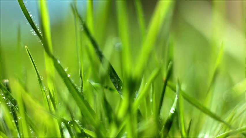 green grass macro - HD stock video clip