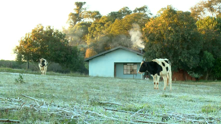 sunrise at a small farm in winter with animals - HD stock footage clip