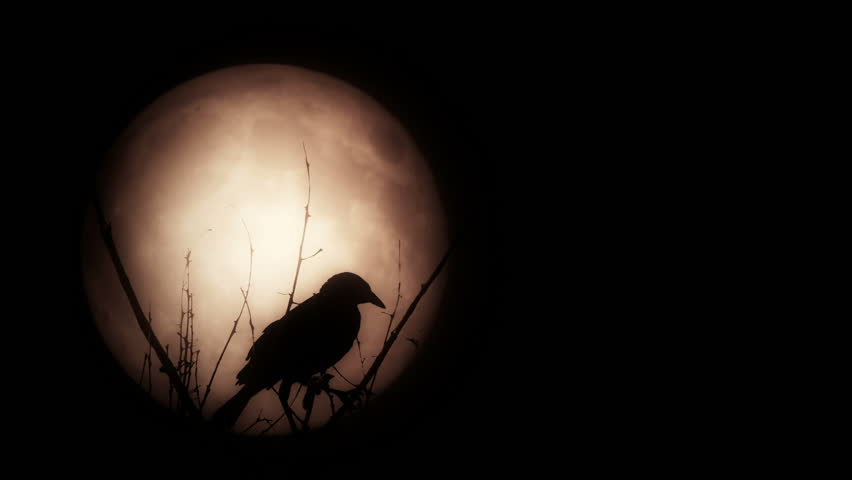 Silhouette of bird over the moon | Shutterstock HD Video #7223890