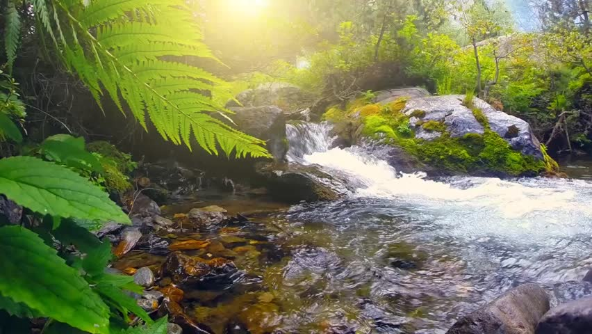 Beautiful Mountain River in the forest. River with fresh water flows over rocks. Beauty nature scene. Full HD 1080 - HD stock video clip