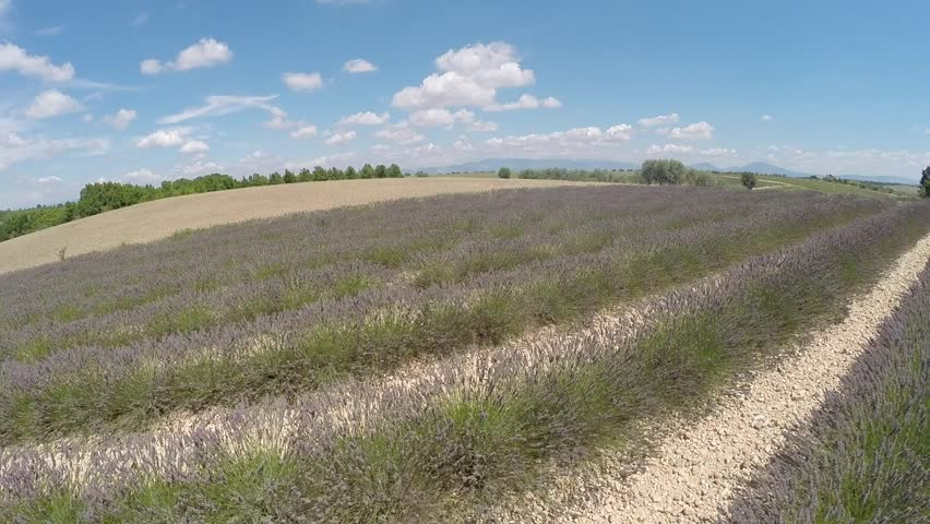 Aerial video Provence - lavender field in the Gordes ,France - HD stock video clip