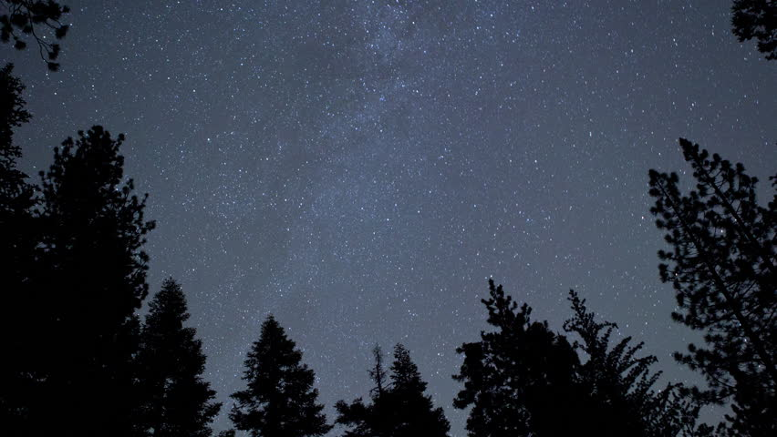 4K time lapse pan right looking up at stars and silhouetted pine trees at night in the San Gabriel Mountains National Monument in California