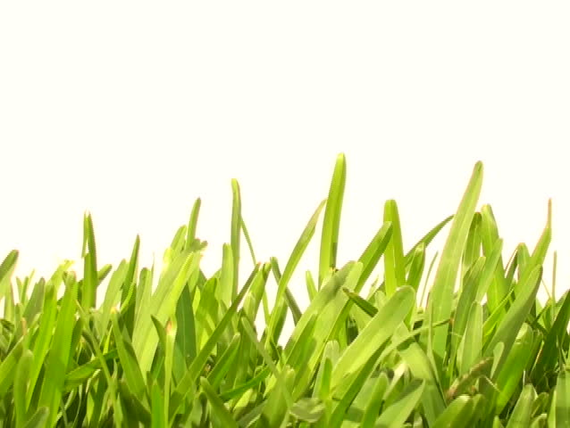 Grass against white background V3 - NTSC - SD stock video clip