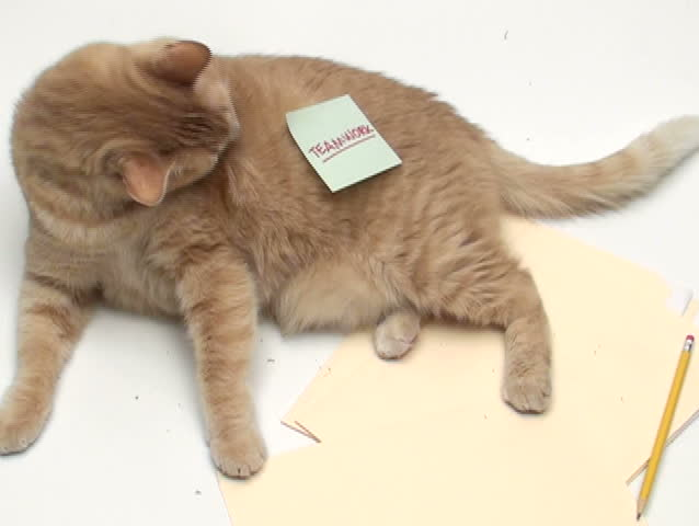 """Cat with post it note """"Teamwork"""" - NTSC - SD stock video clip"""