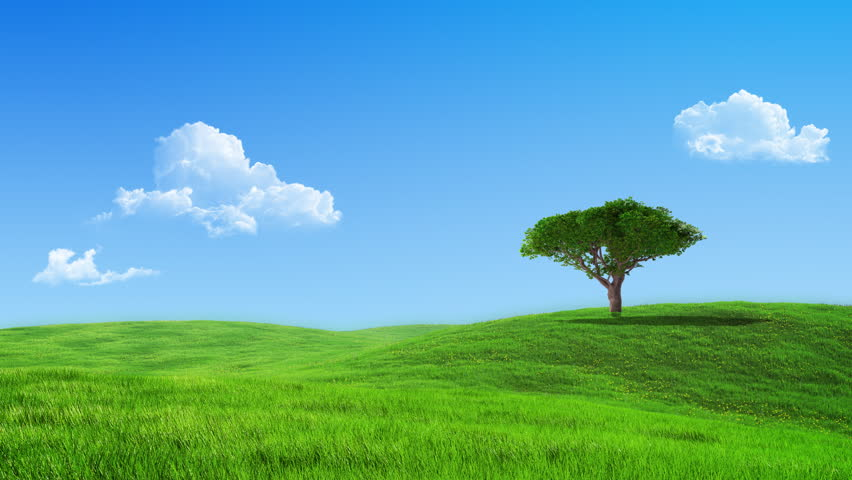Growing up tree on the meadow animated backdrop - HD stock footage clip