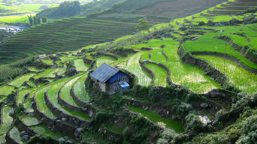 View from Above of Farm with Rice Terraces in Valley Sapa Vietnam | Shutterstock HD Video #7600477