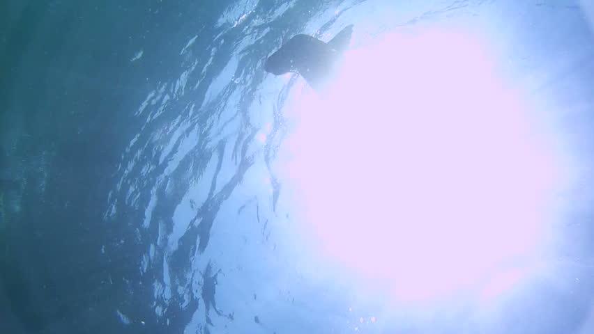 Australian Fur Seal Sea Lion HD - HD stock video clip