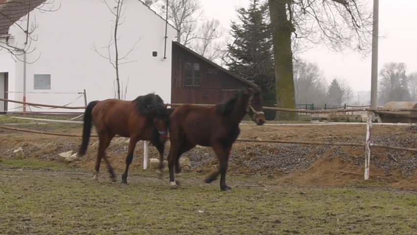 Horses playing and chasing each other - HD stock video clip