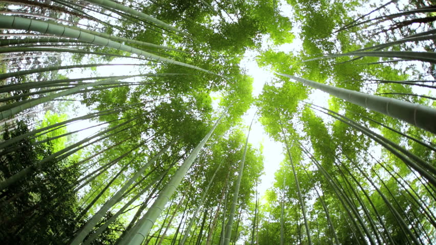 Related Keywords & Suggestions for natural environment japan