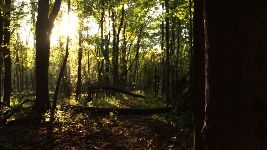 Autumn in the woods and sunset with rays shining through the trees. The film was shot in early October in sunny day. | Shutterstock HD Video #7849606