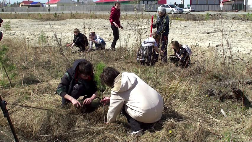 SURGUT, - September 04: Schoolchildren are planting saplings of a cedar. September 04, 2013 in Surgut, Yugra, Russia.